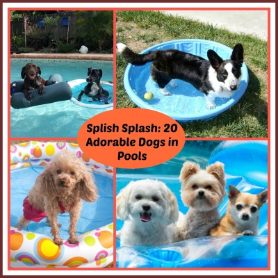 dogs, dog pools
