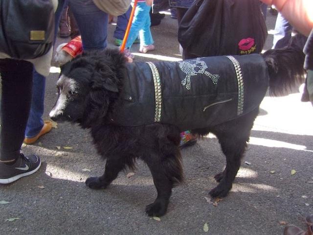 2013 Halloween Pet Parade, Tompkins Square Park, dog parade, dog Halloween costumes,