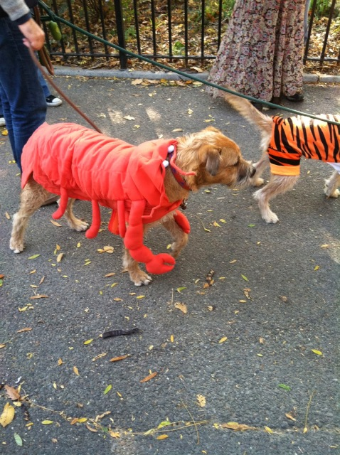 2013 Halloween Pet Parade