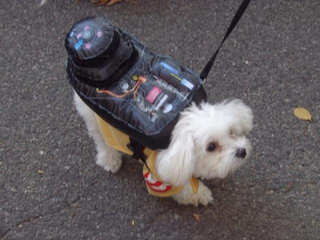 2013 Halloween Pet Parade, Tompkins Square Park, dog parade, dog Halloween costumes,2013 Halloween Pet Parade, Tompkins Square Park, dog parade, dog Halloween costumes,