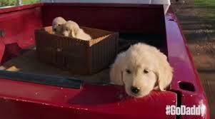 puppy mills, superbowl 2015, superbowl XLIX, godaddy, godaddy puppy, bill parsons,