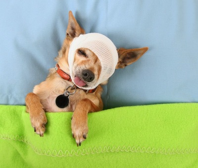 Top Accident-Prone Dog Names, dog names, pet names, dog accidents, pet insurance
